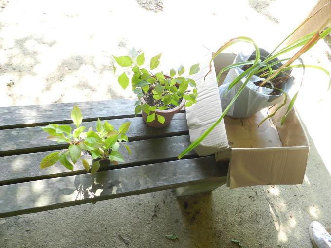 エコバッグ教室と万葉植物園 009