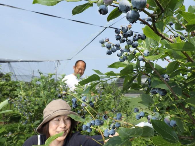 富山市産のブルーベリージャムをお届けします