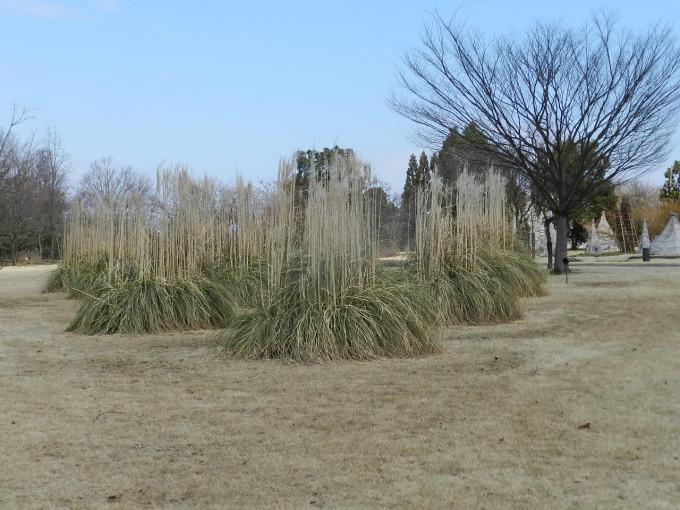 中央植物園3.11 064