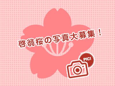 啓翁桜の写真投稿を大募集!